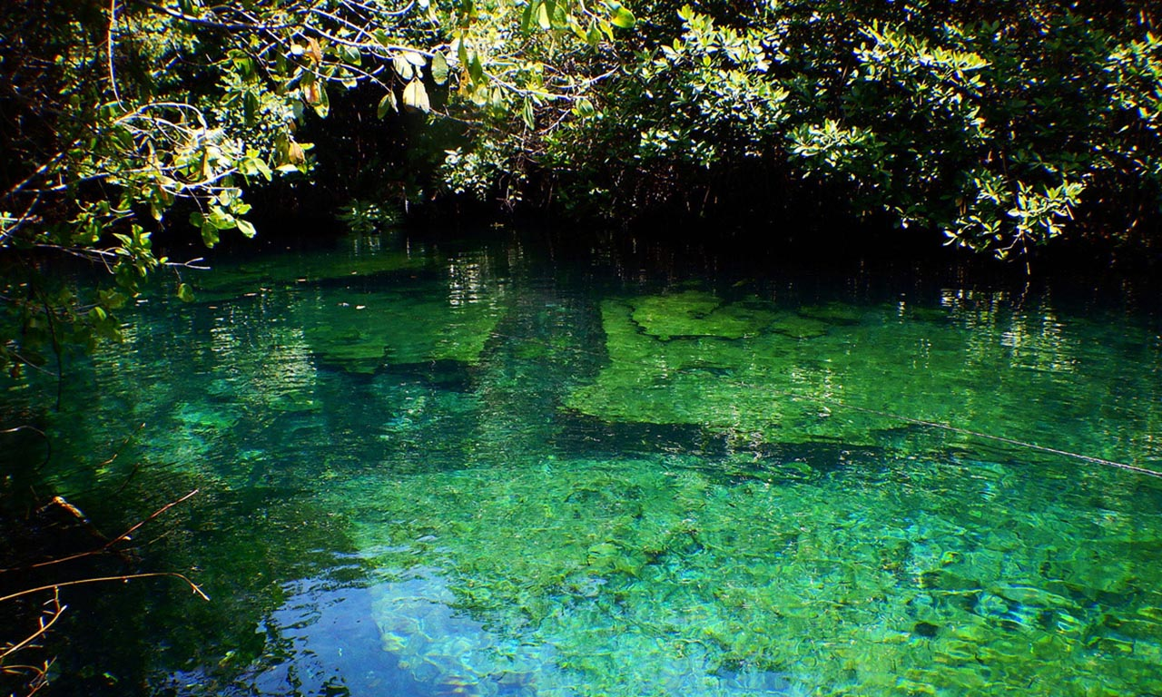 Cenote Xcacel